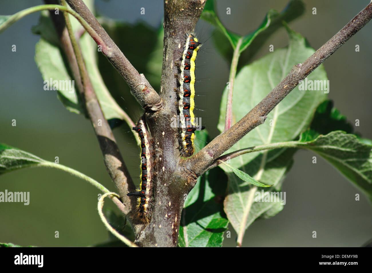 beautiful pests - Stock Image