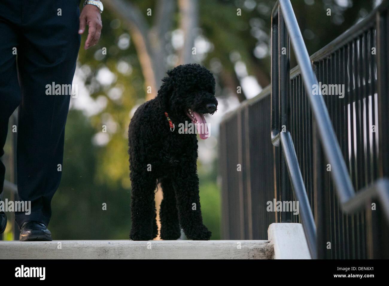 Presidential pet Sunny Obama. - Stock Image