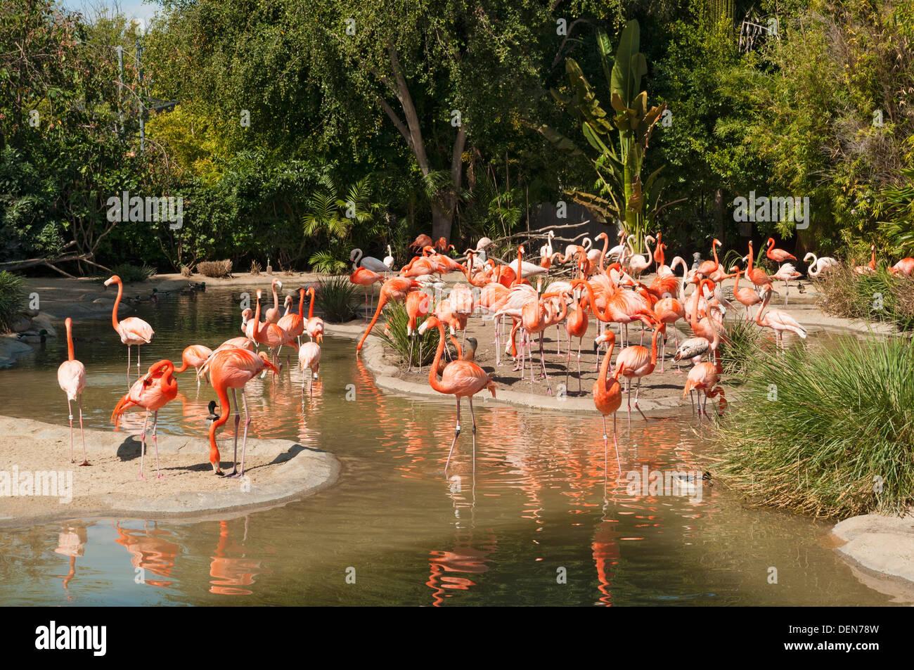 San Diego Zoo Stock Photos & San Diego Zoo Stock Images - Alamy