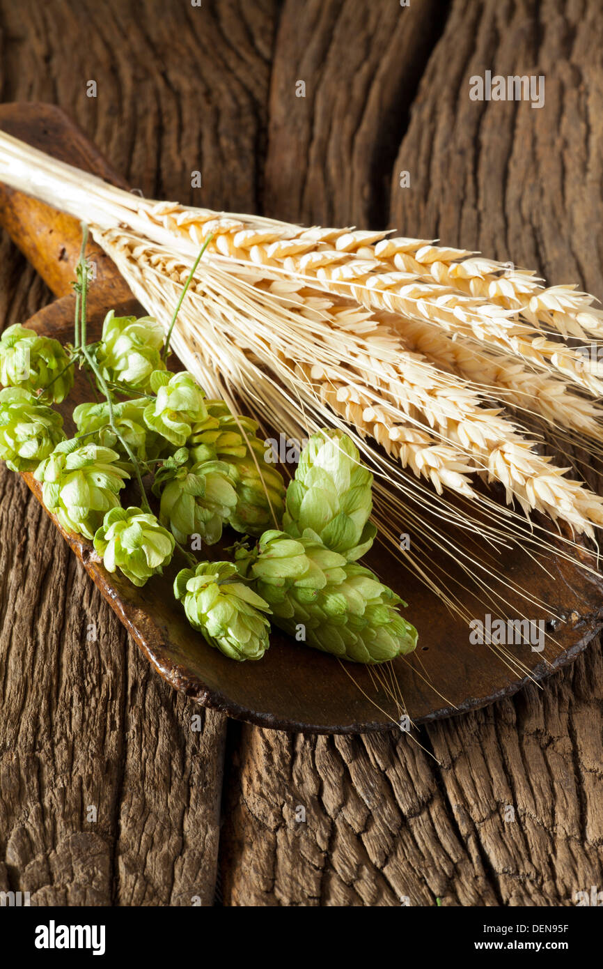 Hops and golden ripe Ears of Grain on a old wooden shovel is lying on a rustic wooden Table - Stock Image