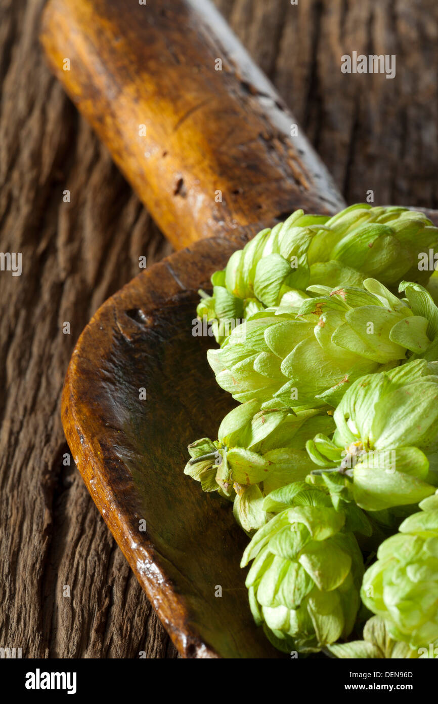 Ripe green Hops on a old wooden Shovel is lying on a rustic wooden Table - Stock Image