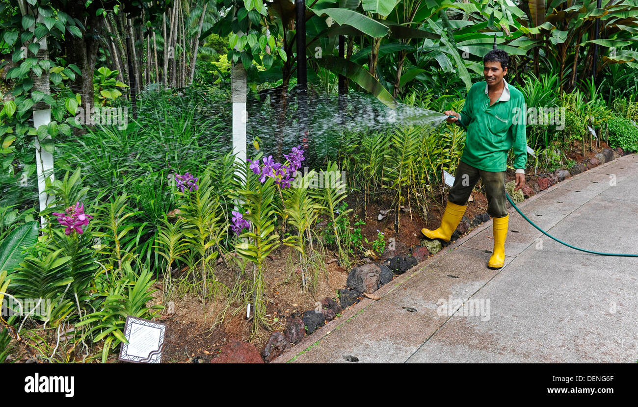 Gardener Attending Plants At The Botanic Gardens In Singapore.