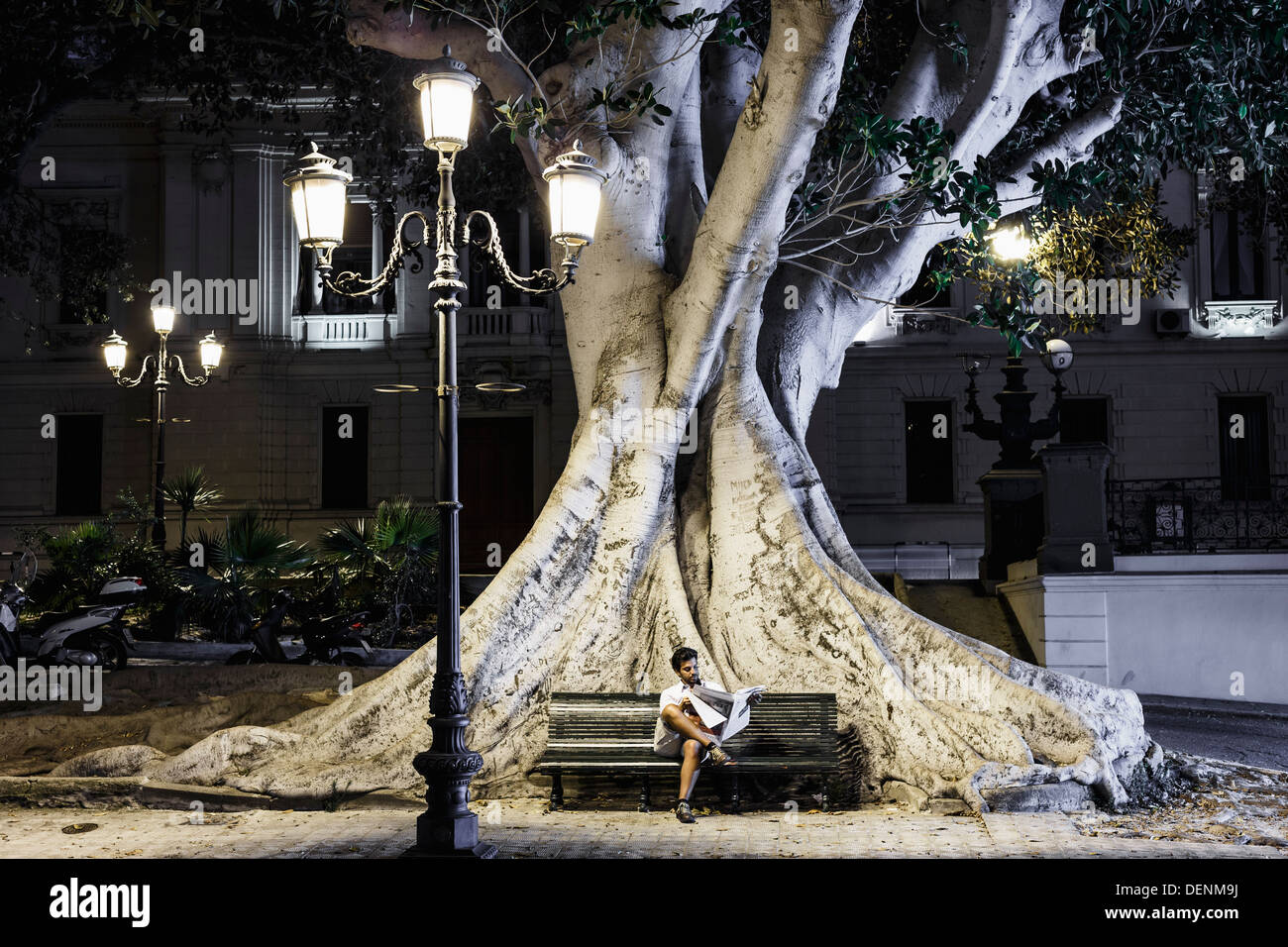 Man sitting on a bench reading under a streetlight. Behind him, the trunk and the roots of a  ficus macrophylla, - Stock Image