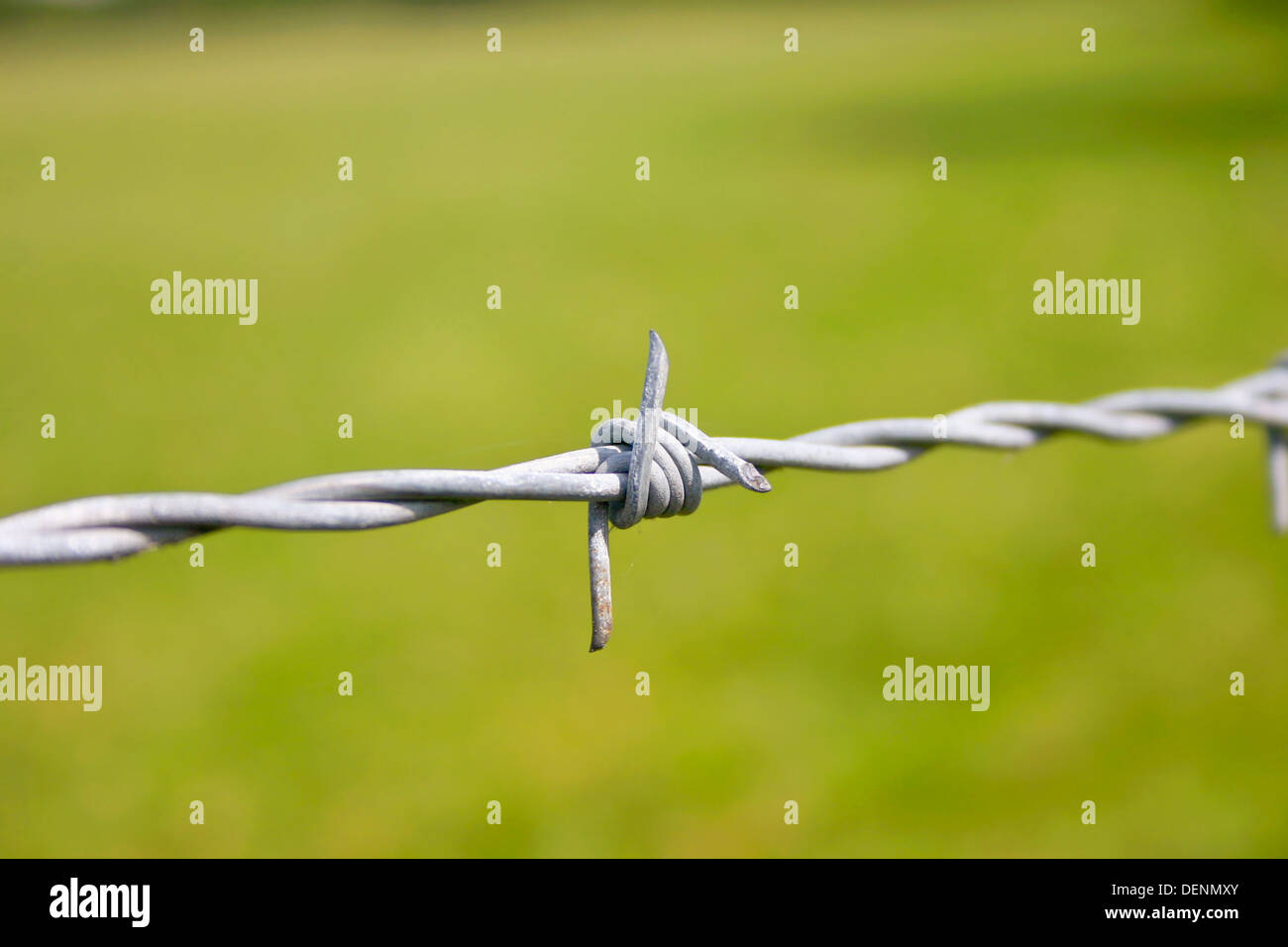 A Closeup of a Barbwire Spike - Stock Image