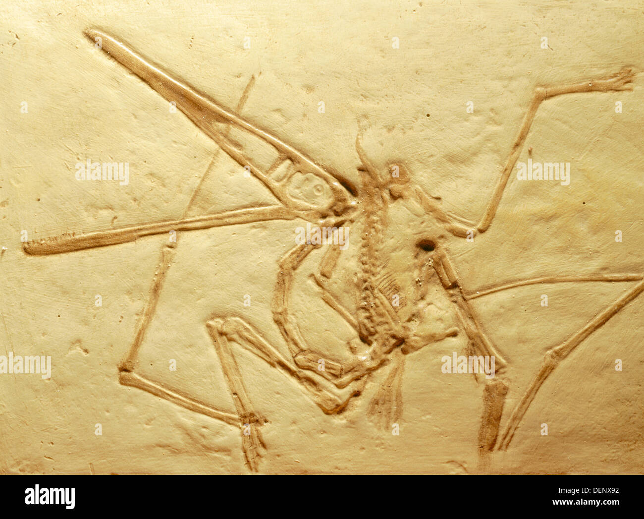 Pterodactyl (Pterodactylus antiques), Jurassic, Germany - Stock Image