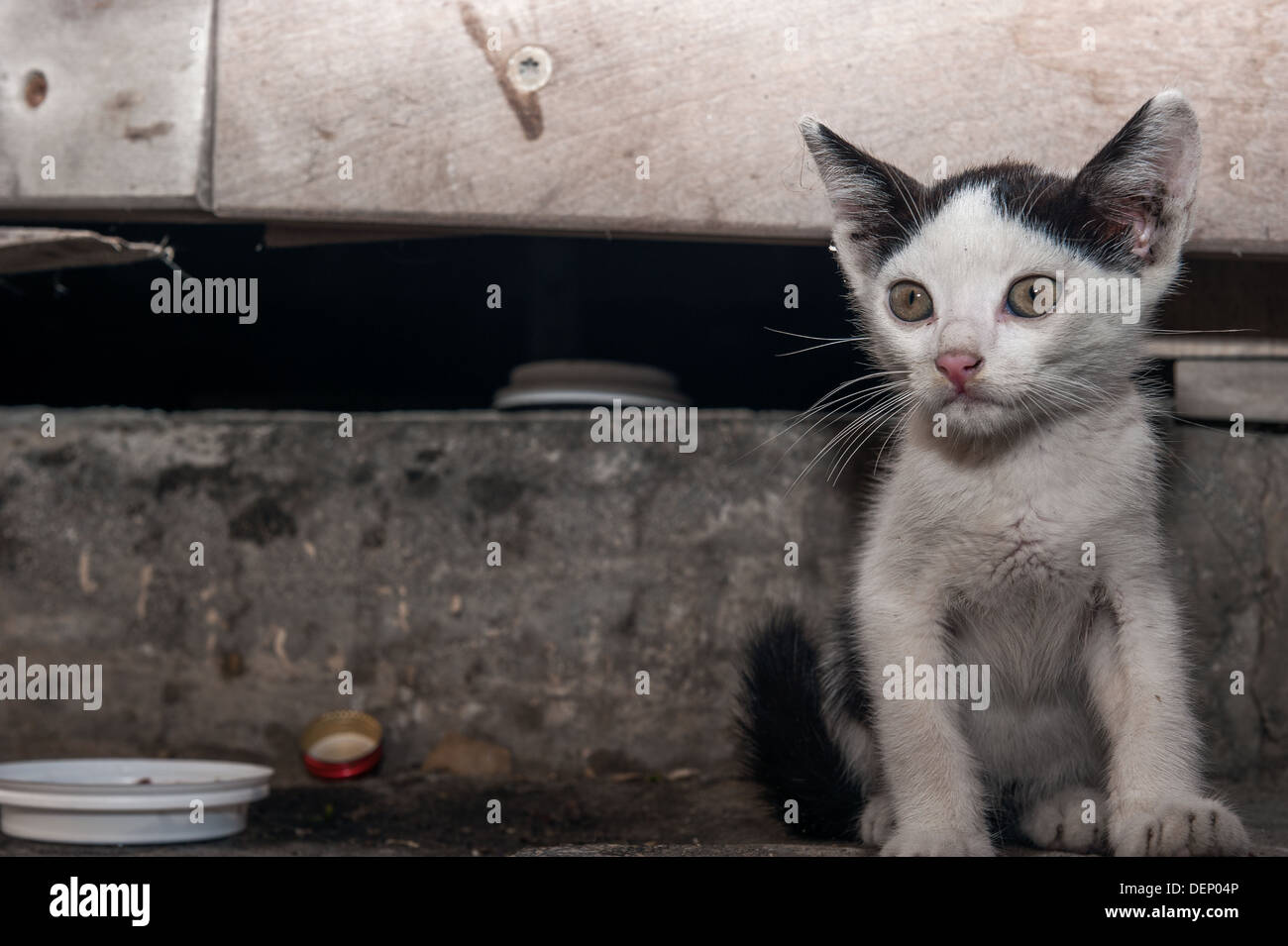 Cat In Gutter High Resolution Stock Photography And Images Alamy