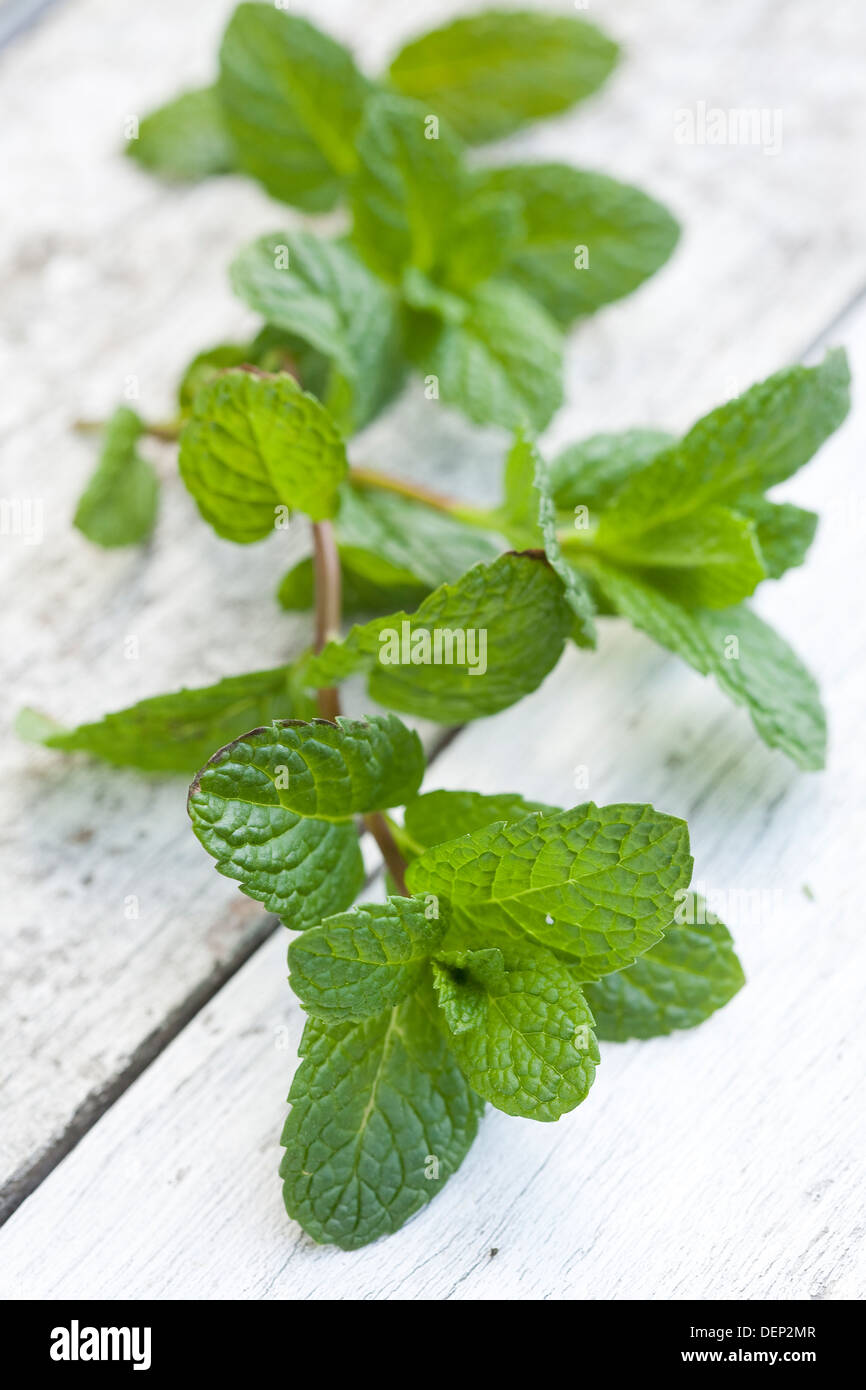 A sprig of fresh mint on a white wooden surface. - Stock Image