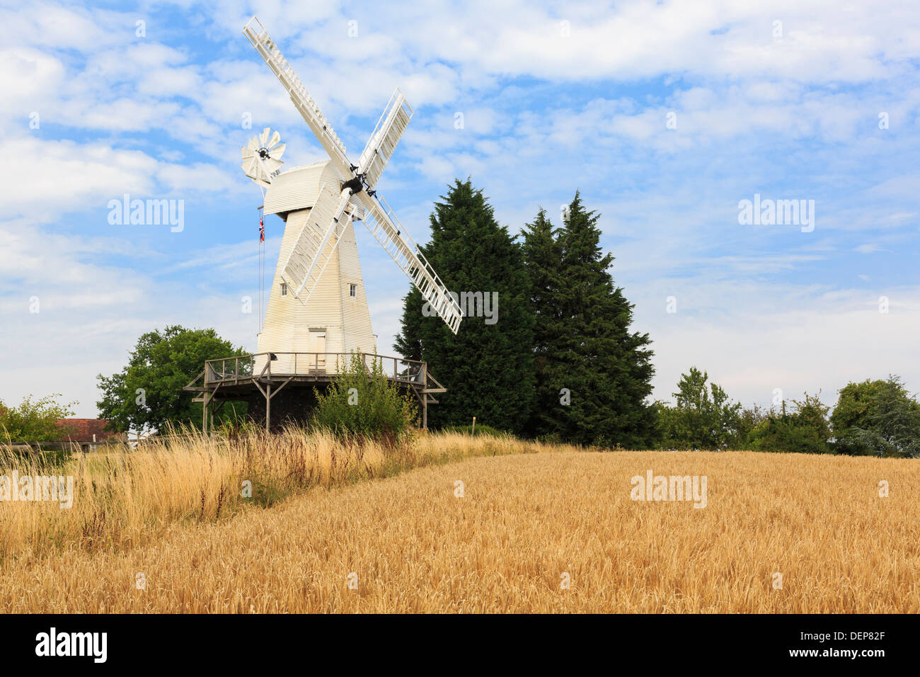 19th century Kentish smock mill restored working wooden windmill beyond a field of Barley in English countryside. Woodchurch Kent England UK Britain - Stock Image