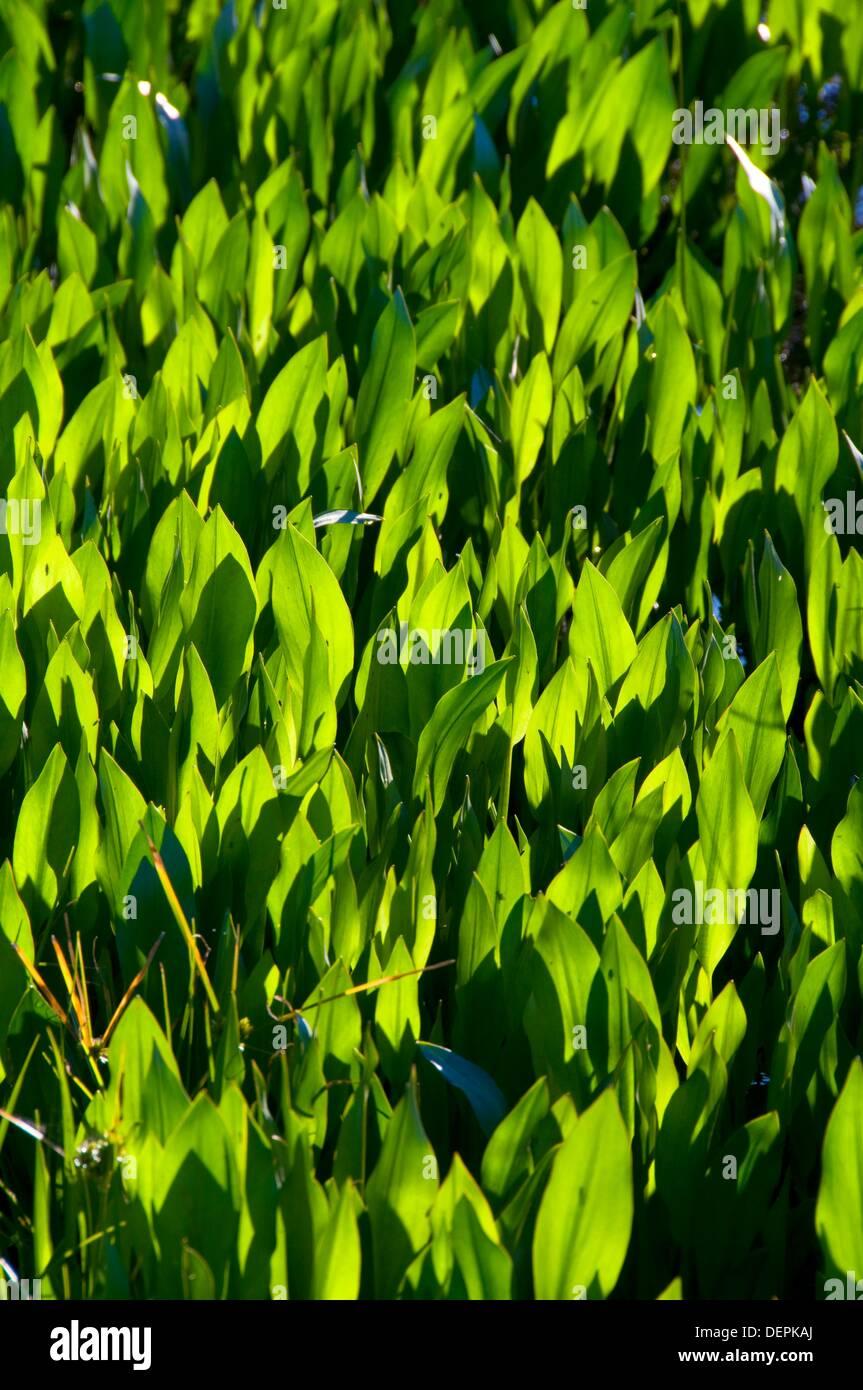 Arrowheads Stock Photos & Arrowheads Stock Images - Alamy