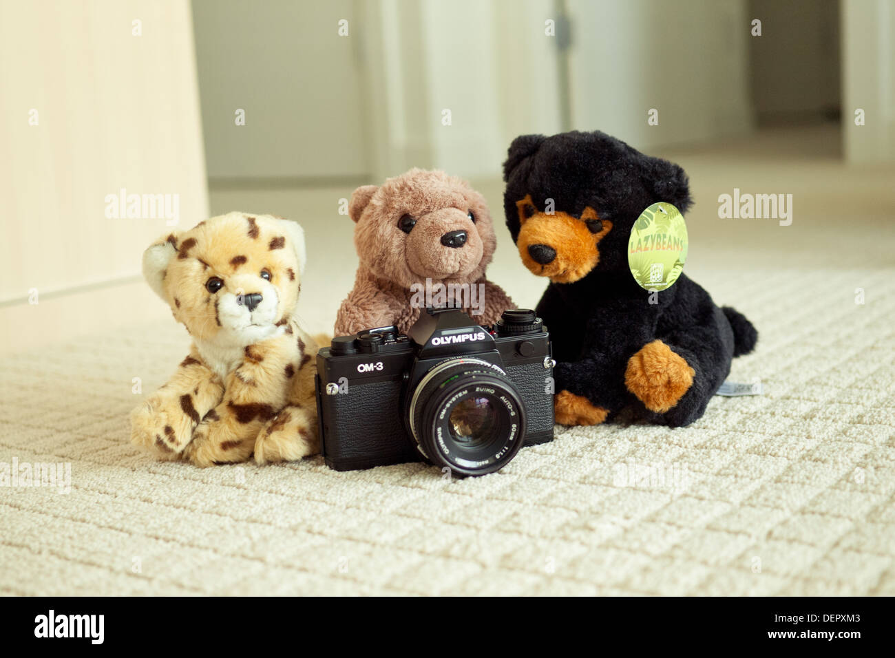 The world's cutest cheetah, brown bear and black bear pose with the legendary Olympus OM-3 film SLR camera. - Stock Image