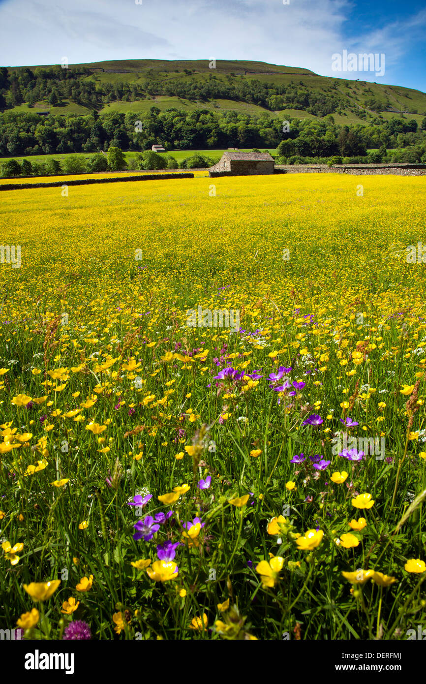 Wild flower meadow near Gunnerside, Yorkshire Dales National Park - Stock Image
