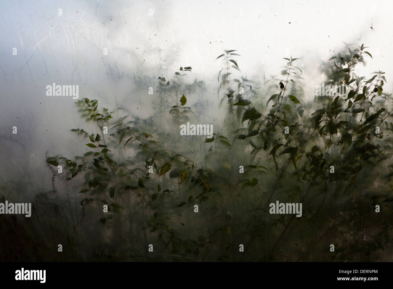 Plants seen growing through polytunnel sheeting - Stock Image