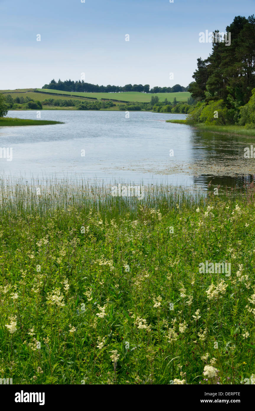 Lindean Loch nature reserve and lake near Selkirk Scottish Borders, in summer - Stock Image