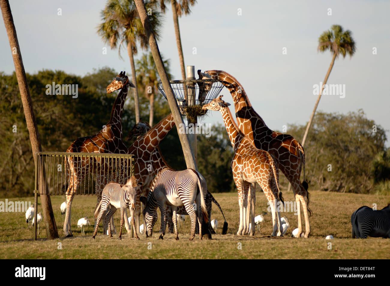 Busch Park Gardens Tampa Stock Photos & Busch Park Gardens Tampa ...