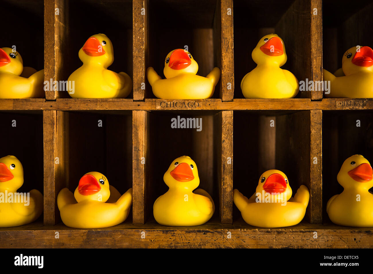 Row Line Of Ducks Stock Photos & Row Line Of Ducks Stock Images - Alamy