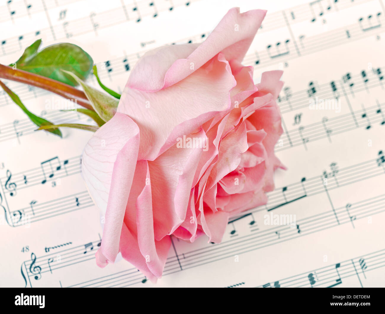 Musical note flower stock photos musical note flower stock images pink rose lays on a musical paper stock image mightylinksfo
