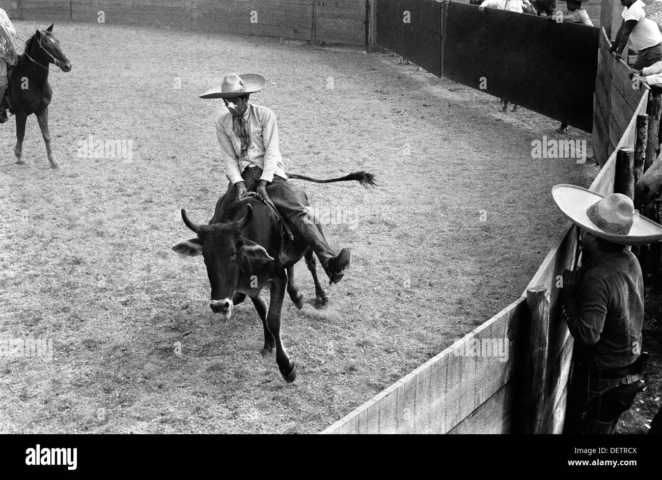 Rodeo Mexico, cowboy known as Charros  riding a bull.  1973 HOMER SYKES - Stock Image