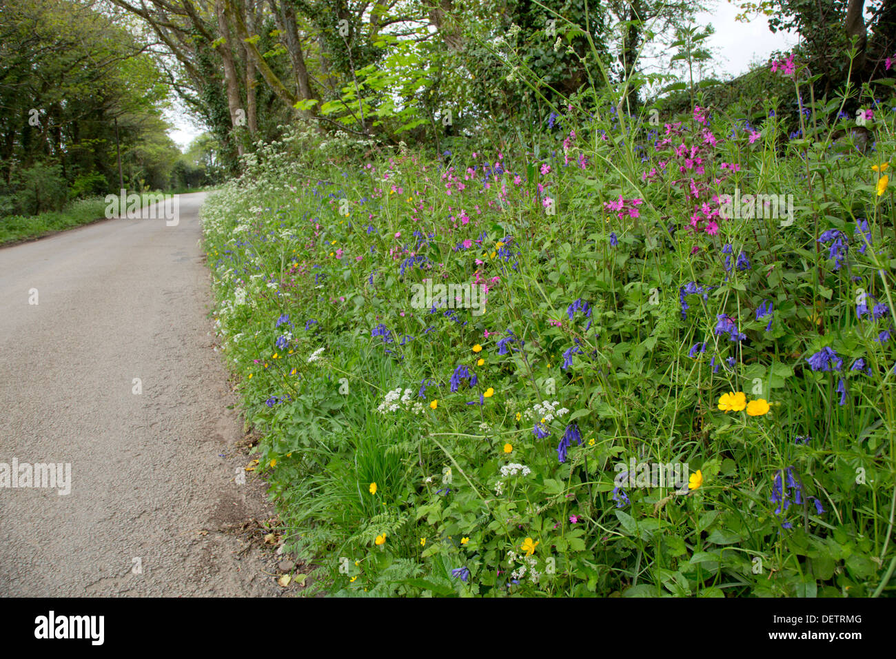 Flowers; Roadside Verge; Spring; Cornwall; UK - Stock Image