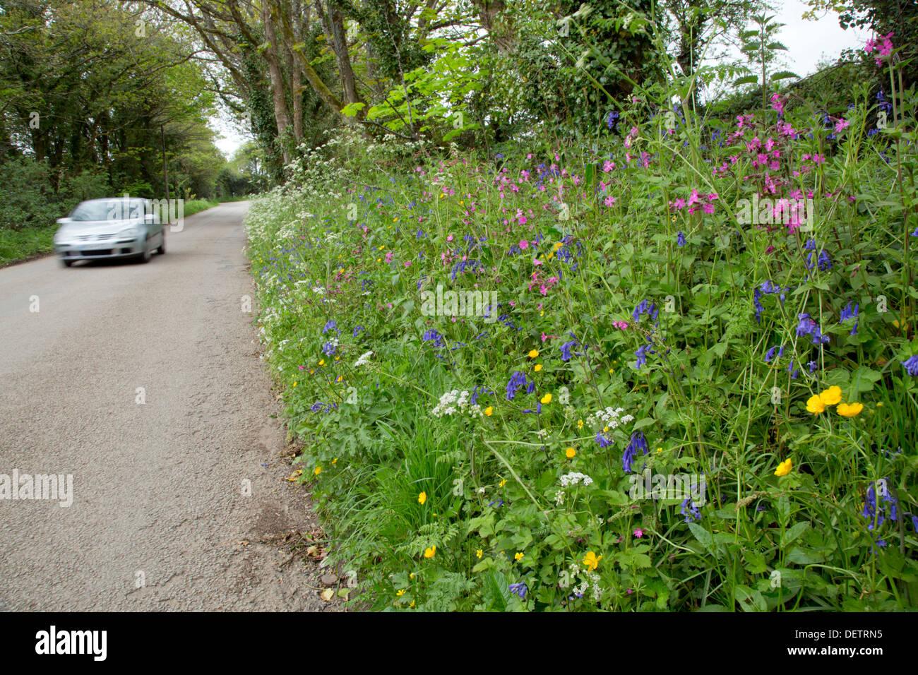 Flowers; Roadside Verge; Spring; Cornwall; UK - Stock Image