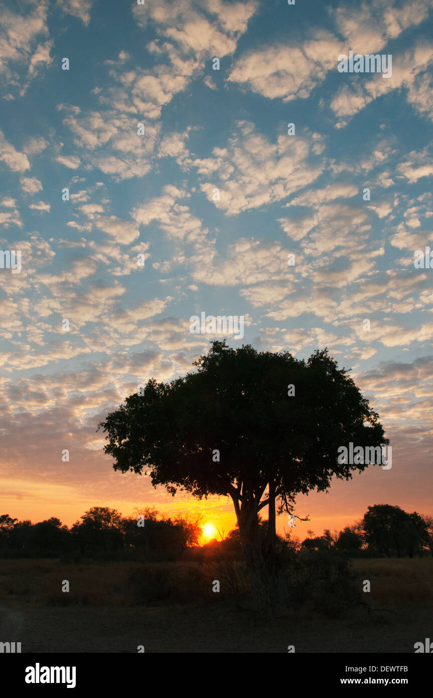 African Sunset, Okavango Delta, Botswana - Stock Image