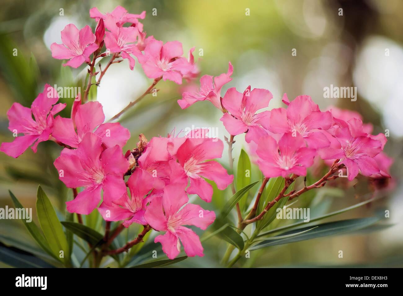 Flowering Tree In South Carolina Stock Photos Flowering Tree In