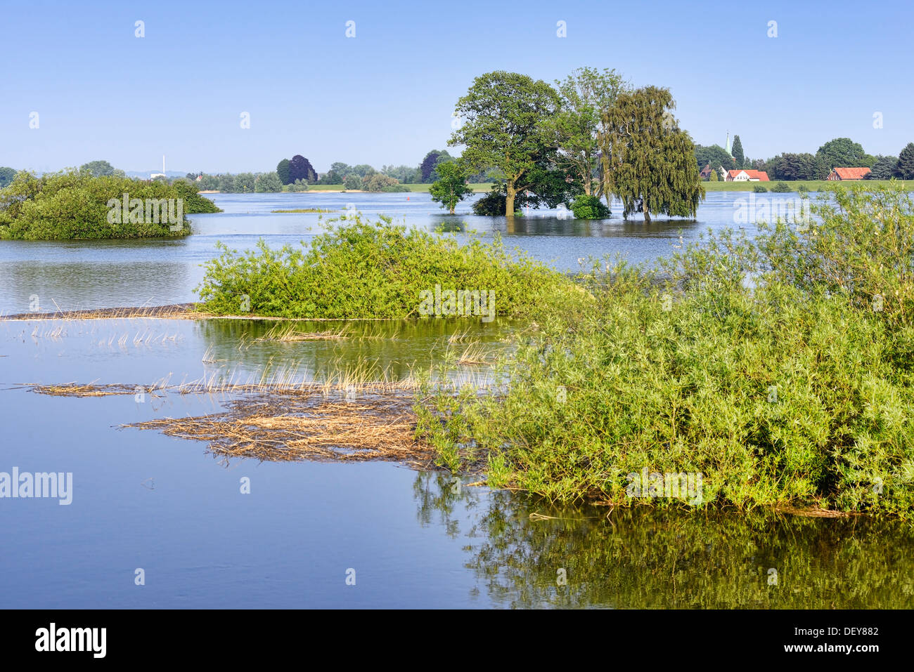 Elbe flood in 2013 in old narrow nurse, 4 and marshy land, Hamburg, Germany, Europe, Elbe-Flut 2013 in Altengamme, Stock Photo