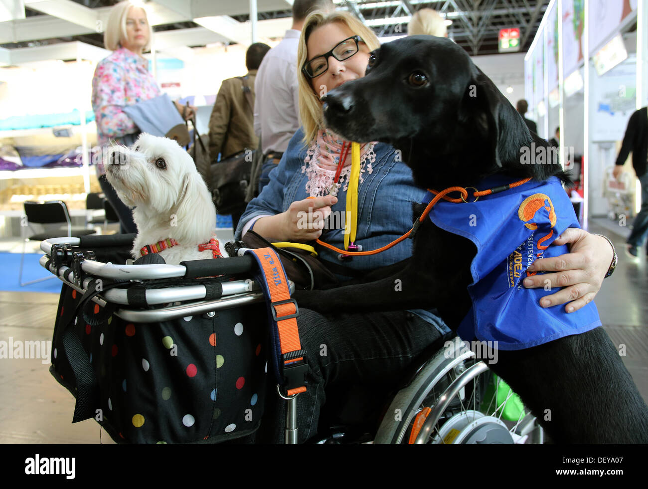 Assistant dog Rocko looks after her disabled master at their expo stand at the Rehacare trade fair in 25 September 2013. The trade fair for people with disabilites runs from 25 until 28 September 2013. Photo: ROLANDWEIHRAUCH - Stock Image