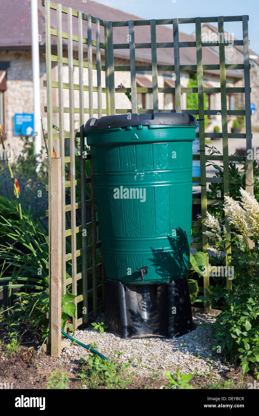 Green water butt/barrel used to collect rainwater to water