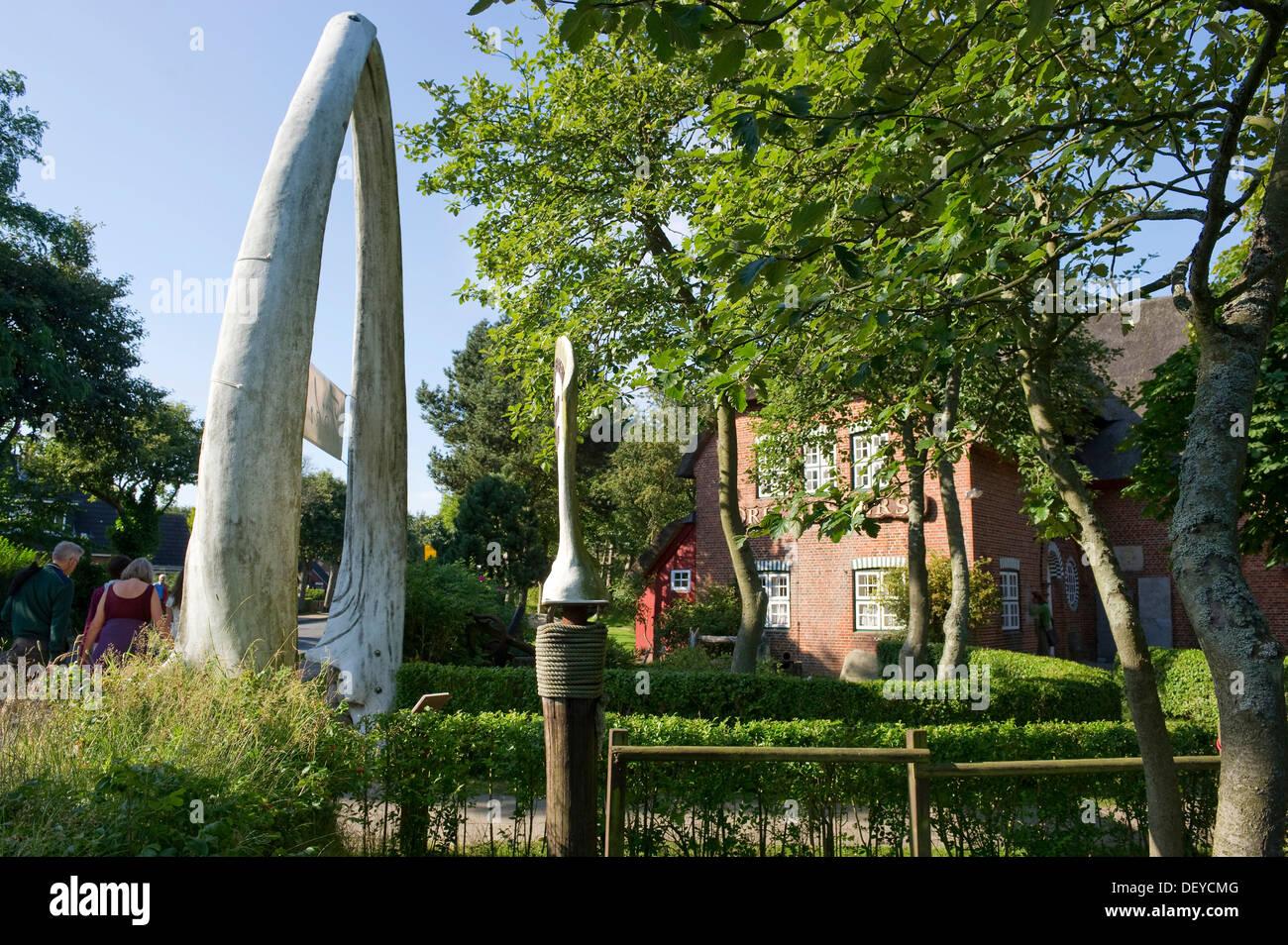 Whale bones at the Friesenmuseum, Wyk, Foehr Island, North Frisian Islands, Schleswig-Holstein - Stock Image