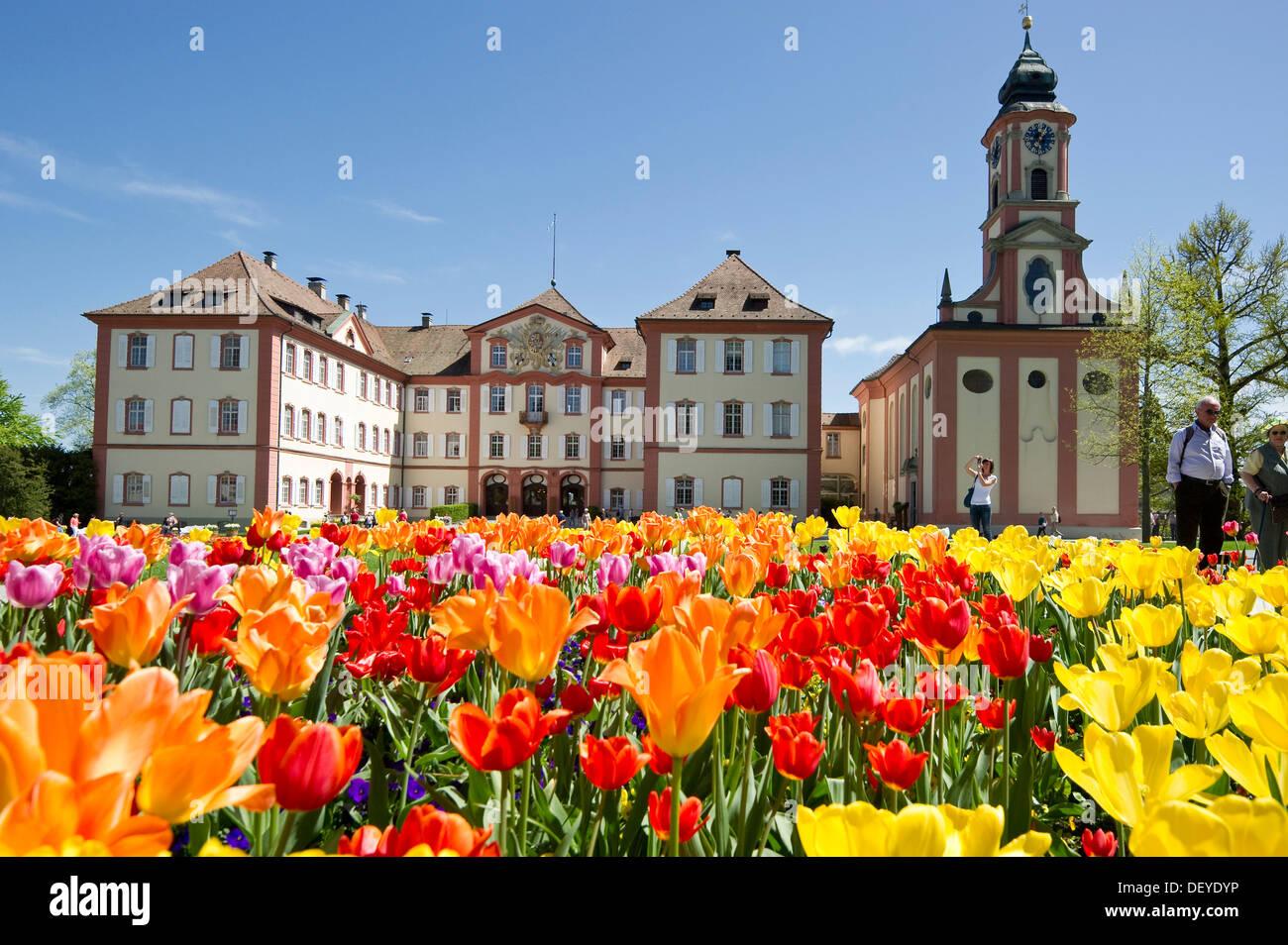 Schloss Mainau Castle and a colourful tulip field, Insel Mainau, Konstanz, Baden-Württemberg, Germany - Stock Image