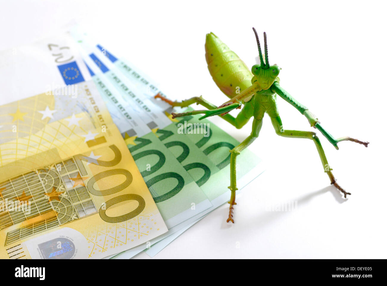 Locust on bank note, symbolic image for hedge funds - Stock Image
