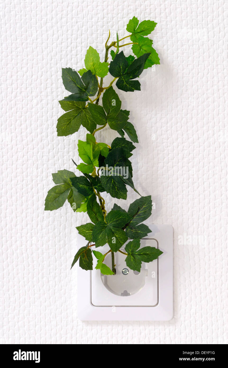Plant growing from a wall outlet, symbolic image for ecologic power - Stock Image