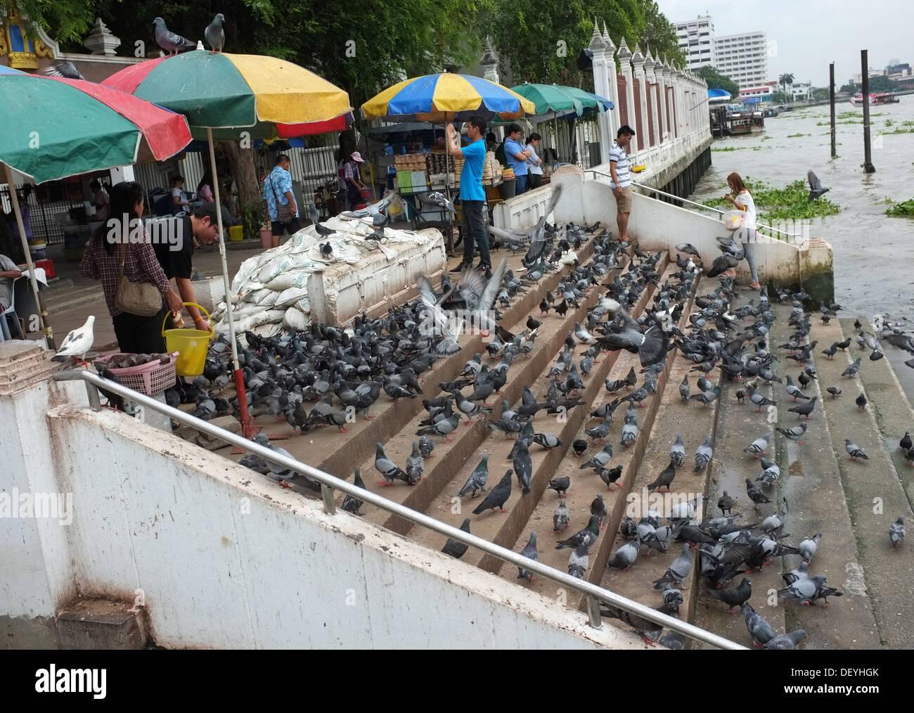 Thai people feed pigeons outside Wat Rakang in Bangkok - Stock Image