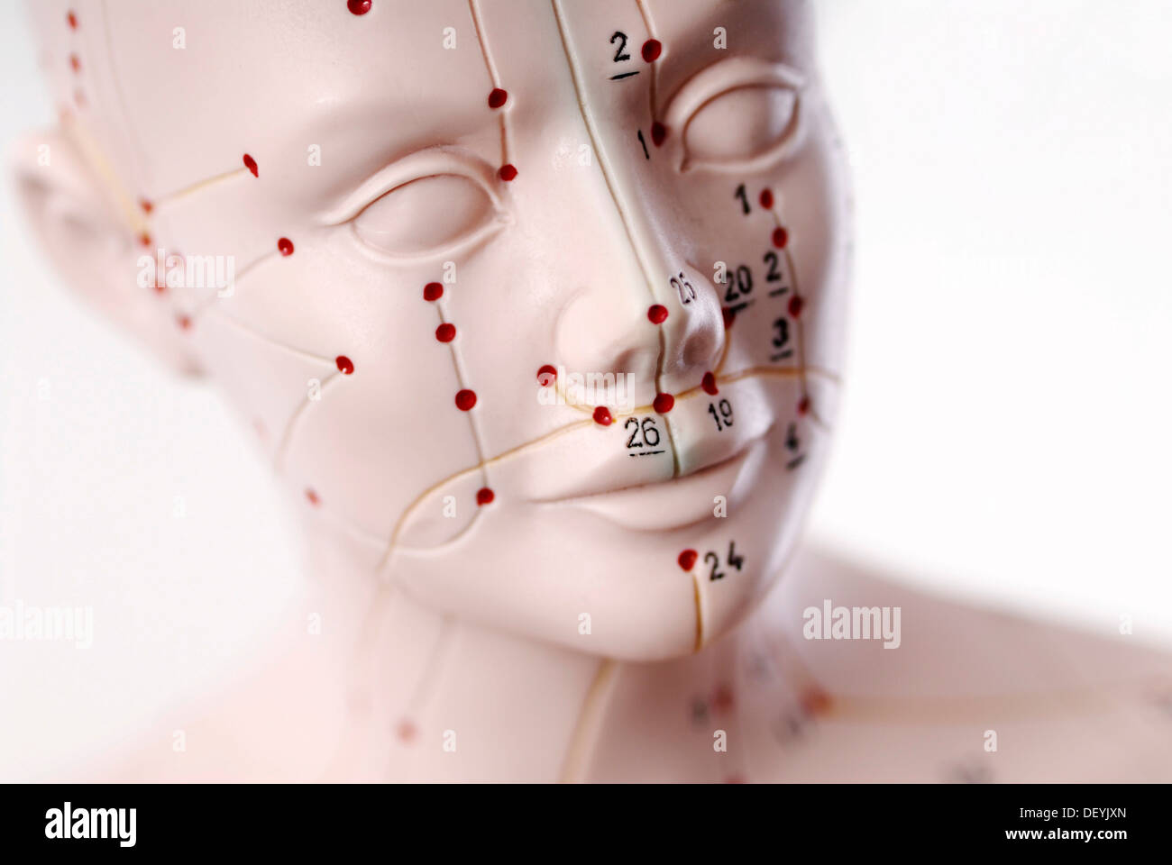 Anatomical model, head with acupuncture points Stock Photo