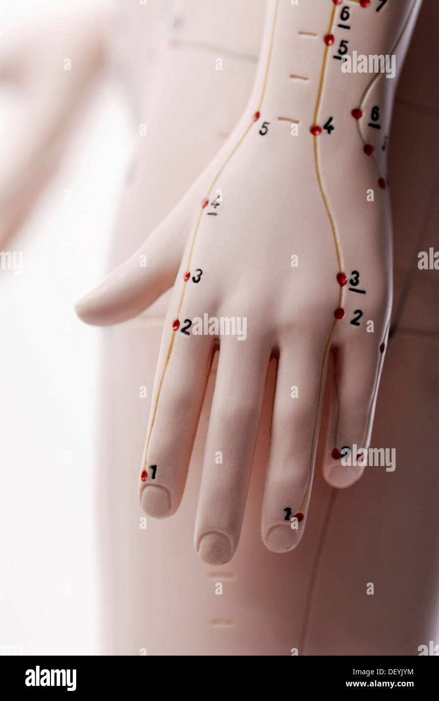 Anatomical model, hand with acupuncture points - Stock Image