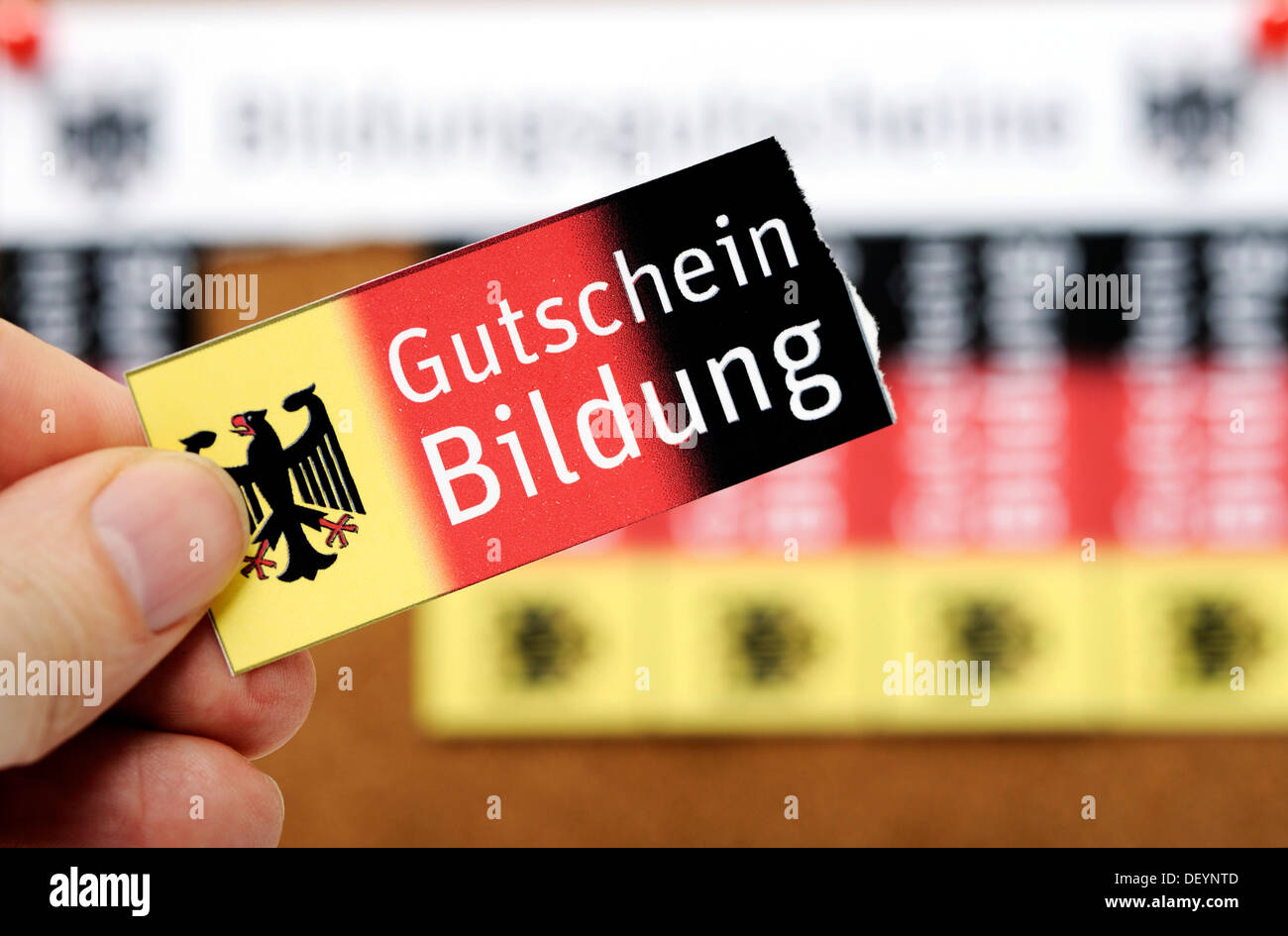 Vouchers on a noticeboard, lettering 'Bildungsgutscheine', German for 'education vouchers', symbolic image - Stock Image
