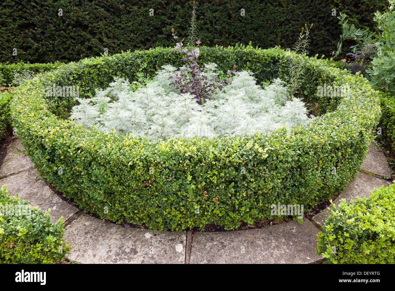 Box hedging in the White Garden,  at the Secret Garden's of Sandwich, Kent - Stock Image