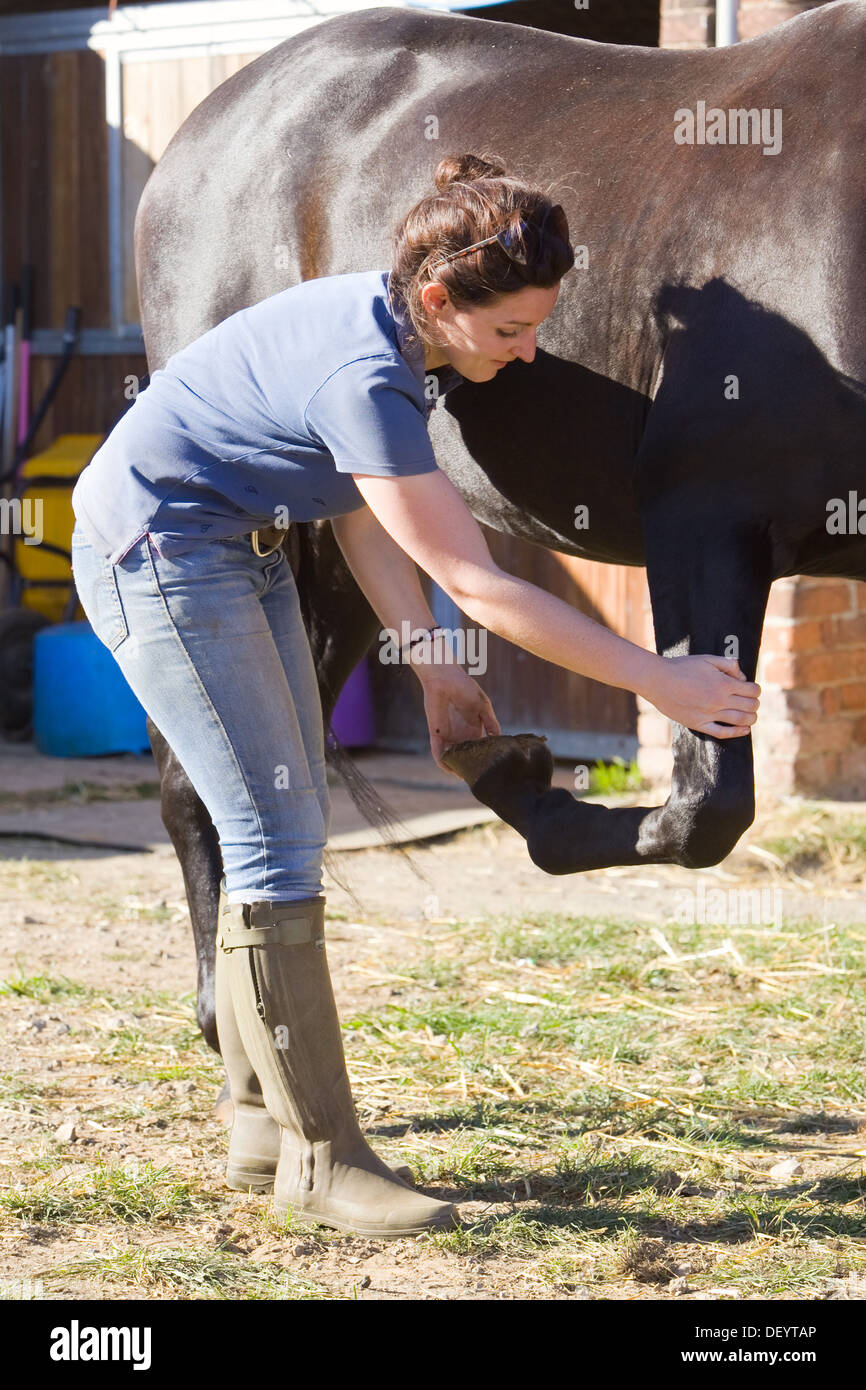 McTimoney-Corley Spinal Therapy being carried out on a horse by an Animal Sports Therapist. - Stock Image