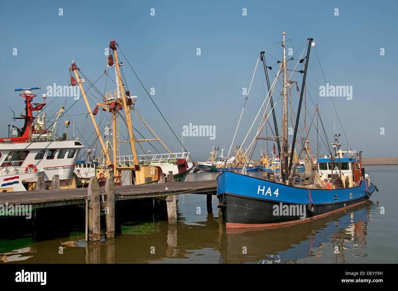Harlingen Fishing port with a fish auction function and a home port for Harlingen en Urker cutters Netherlands Friesland - Stock Image