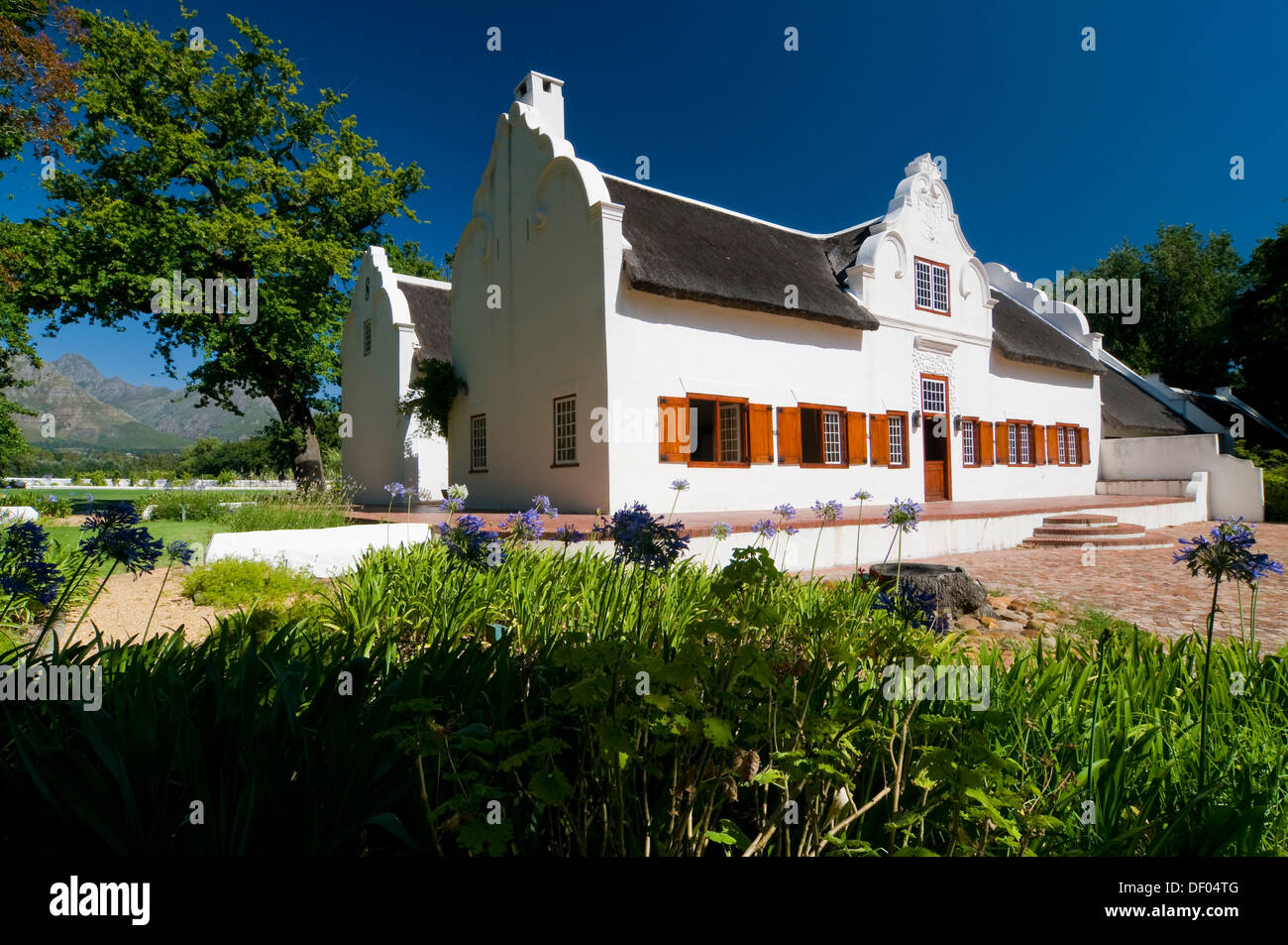 Main house, Blaauwklippen winery, Stellenbosch, Western Cape, South Africa, Africa - Stock Image