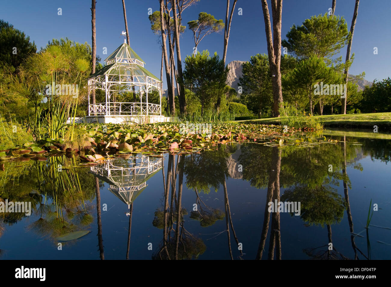 Pond, Boschendal wine estate, between Stellenbosch and Franschhoek, Western Cape, South Africa, Africa - Stock Image