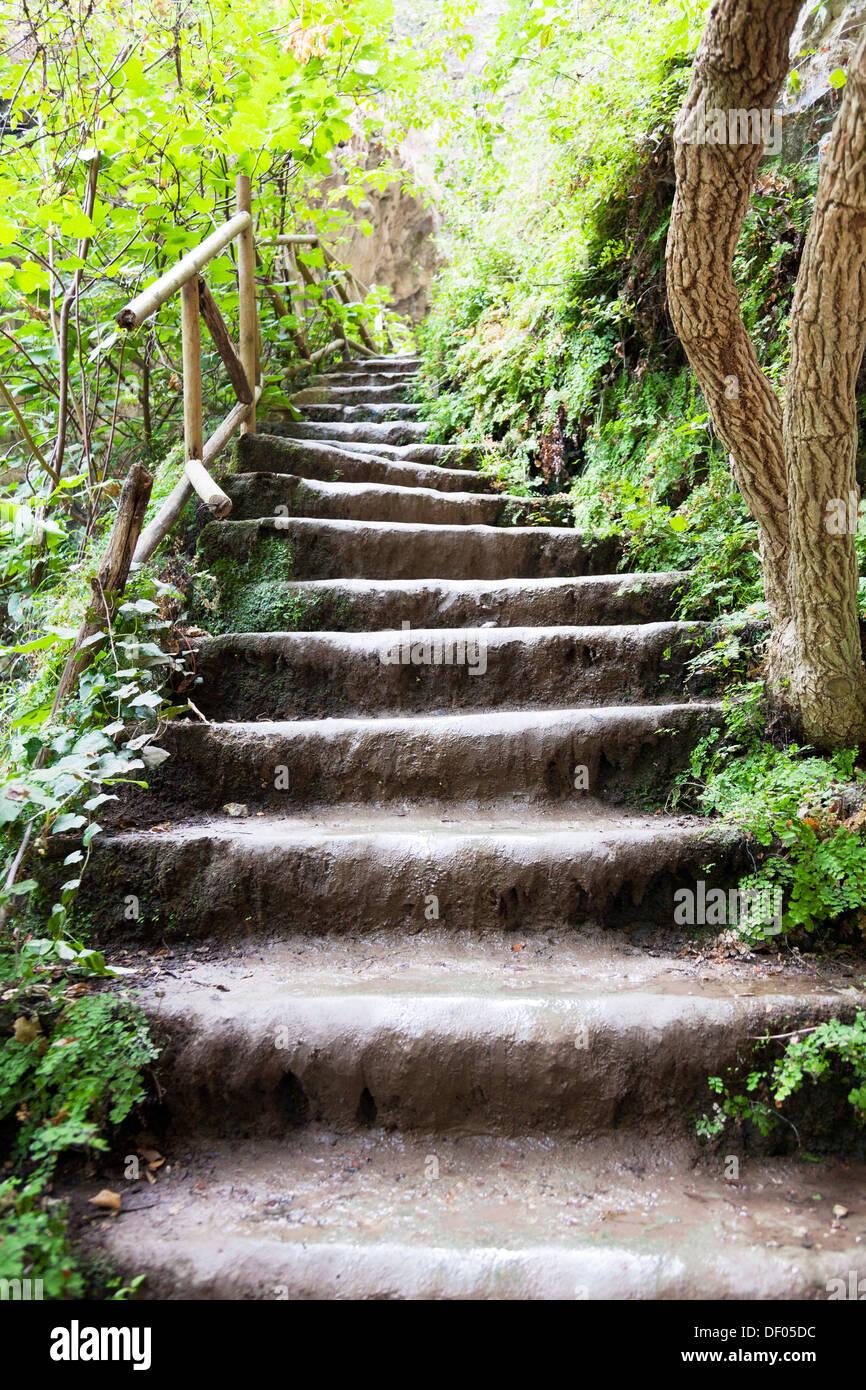 stone steps wet slippery looking up in to trees near Nidri Lefkas Lefkada Greek Island Greece - Stock Image