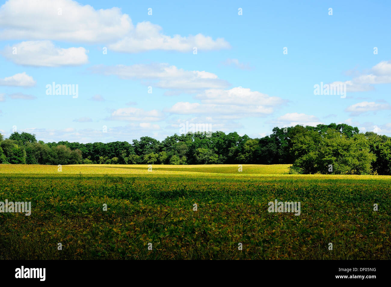 Northern Illinois landscape. - Stock Image