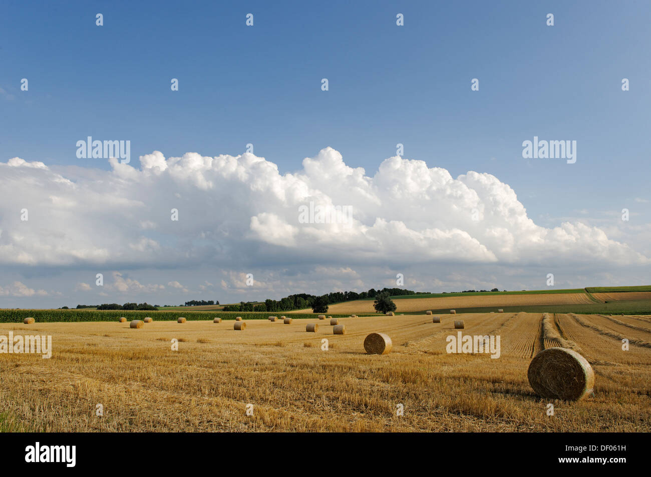 Straw bales on harvested corn fields, near Pellheim, Dachau, Upper Bavaria, Bavaria, Germany - Stock Image