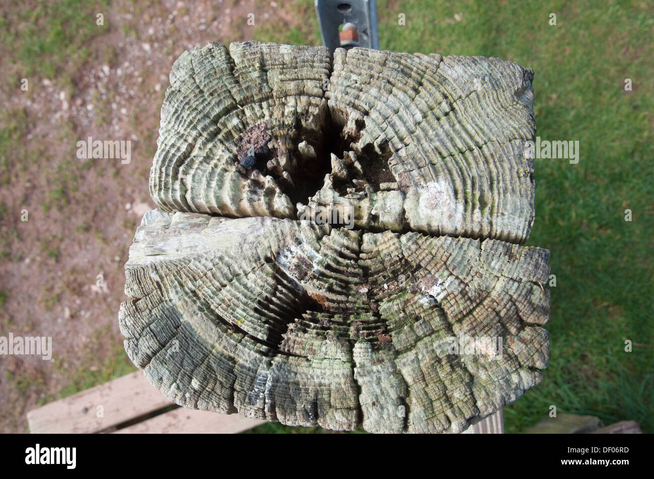 Weathered and eroded end of fence post showing grain and rings of timber - Stock Image