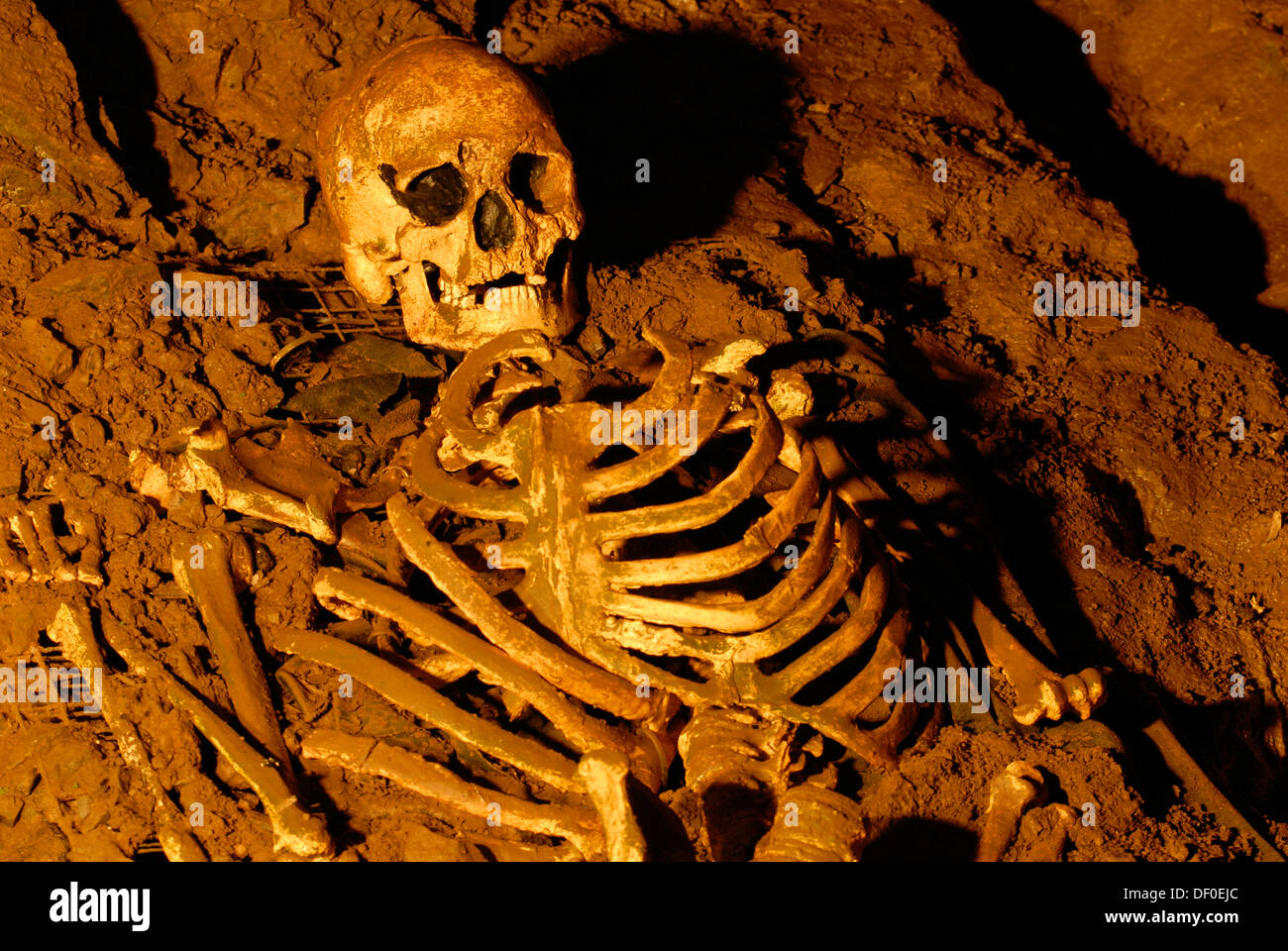 Skull and skeleton from the stone age, Cheddar Man Museum of Prehistory, Cheddar, Somerset, England, United Kingdom, Europe - Stock Image
