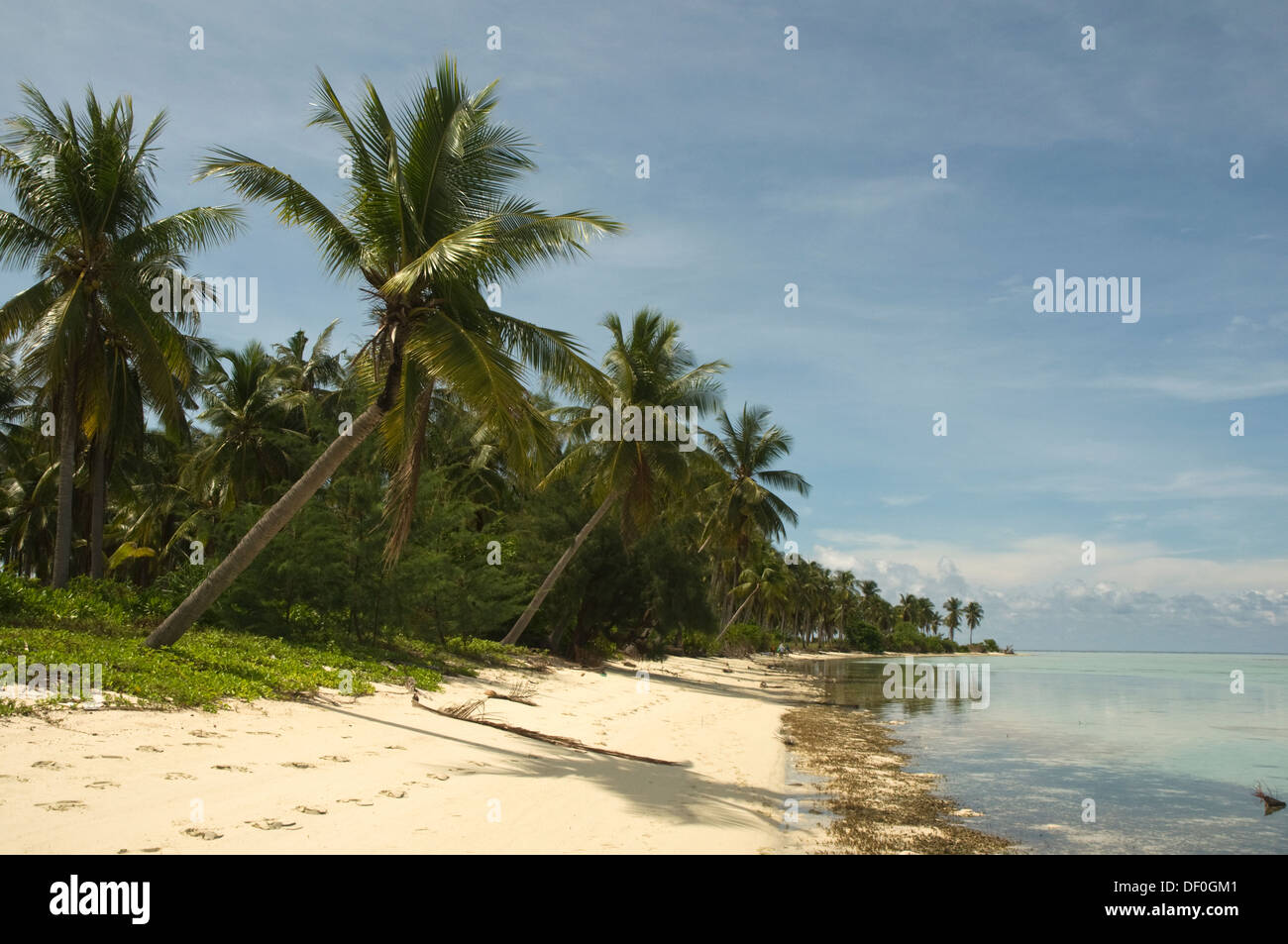 INDONESIA, Karimunjawa Islands (near Java), Little Menjangan Island, idyllic beach with palm trees - Stock Image