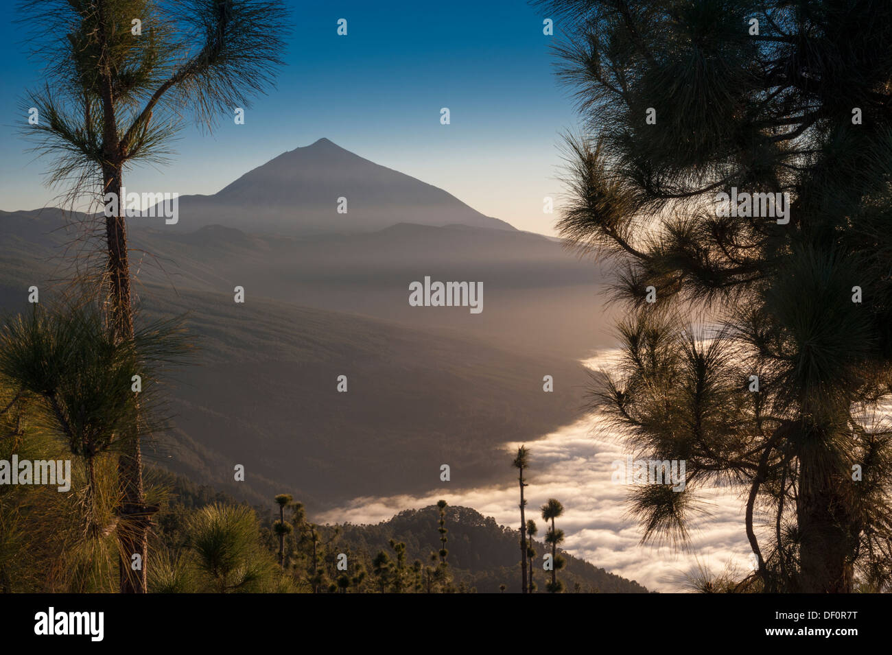 The huge stratovolcano of El Teide, Tenerife, above a sea of clouds (mar de nubes) over the Orotava Valley - Stock Image