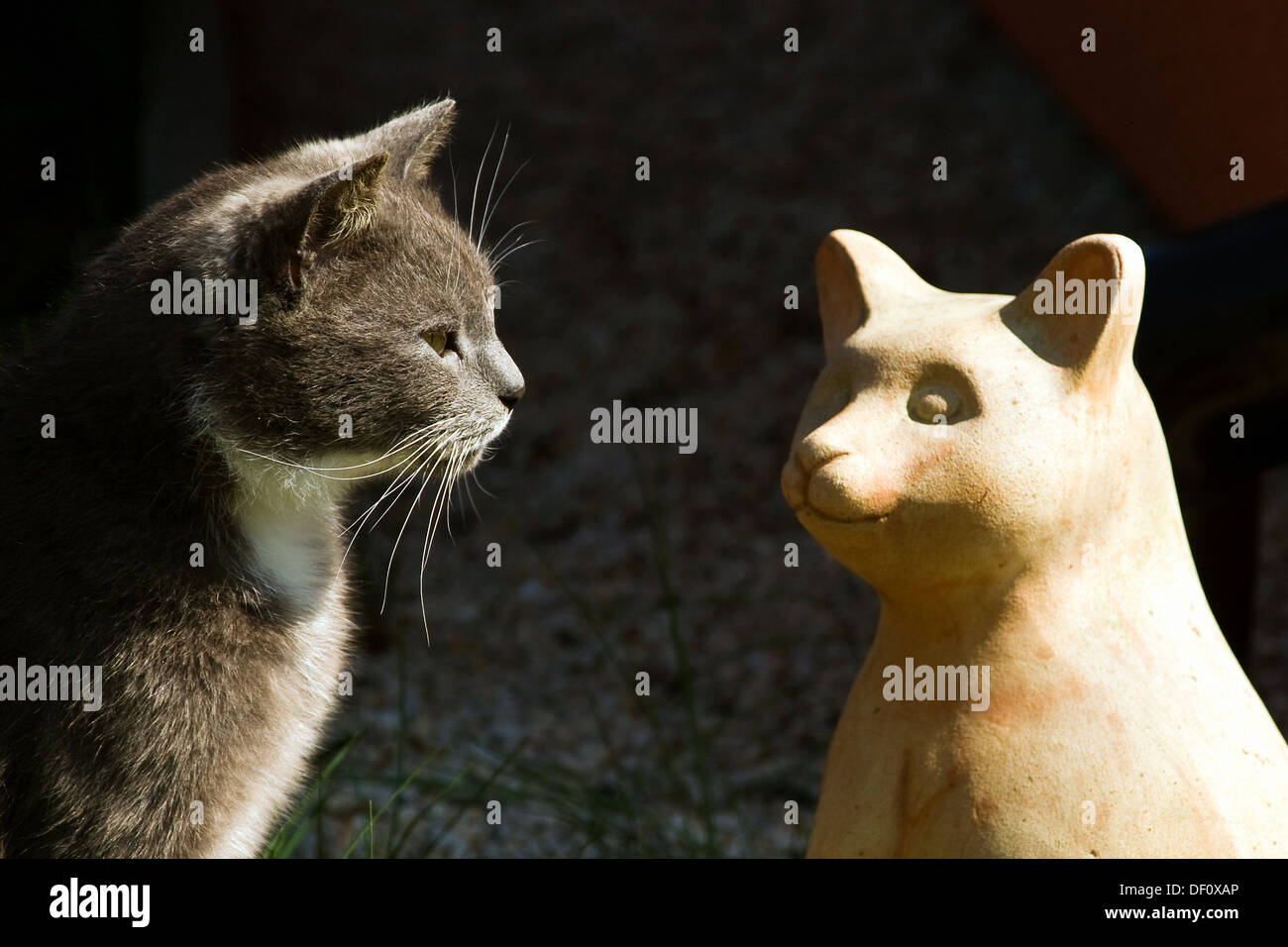 Berlin, Germany, cat looking at a cat figure Stock Photo