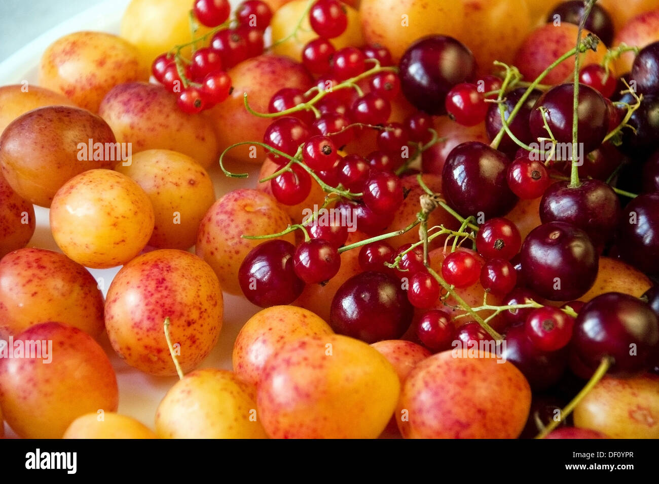 Berlin, Germany, plates with plums, cherries and currants Stock Photo